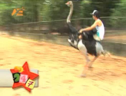 ung dai ve ostrich